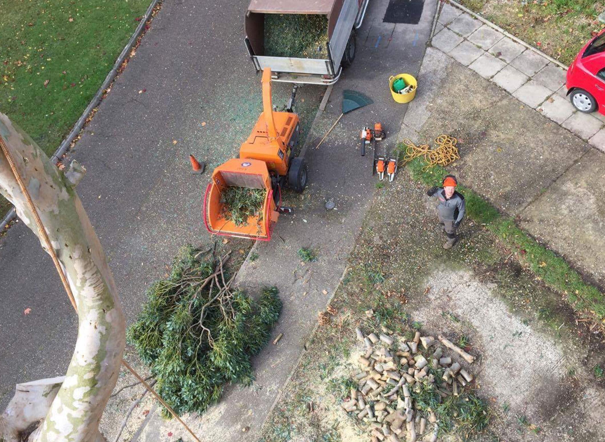 Roadside Tree Management