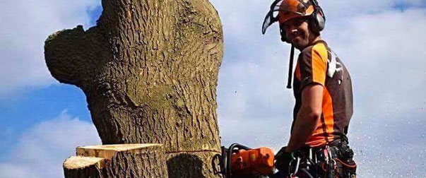 Tree Surgery Cambridgeshire